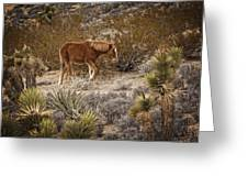 Wild Horse At Cold Creek Greeting Card
