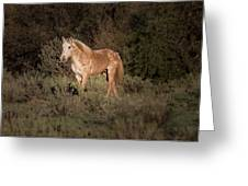 Wild Horse At Sunset Greeting Card