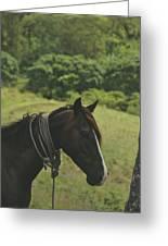 Wild Horse Greeting Card