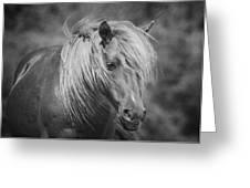 Wild Horse Of Assateague Greeting Card