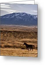 Wild Horse On The Run Greeting Card
