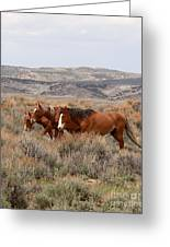 Wild Horse Trio Greeting Card
