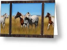 Wild Horse Tryptic Greeting Card