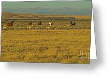 Wild Horses And Antelope-signed-#2216 Greeting Card