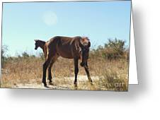 Wild Horses Desert Of Mexico Greeting Card