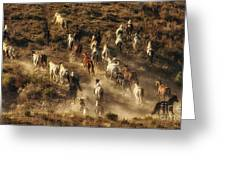 Wild Horses Gone Wild Greeting Card