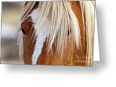 Wild Horses In Wyoming Greeting Card