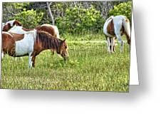 Wild Horses Of Assateague 5 Greeting Card