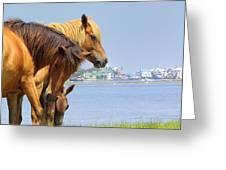 Wild Horses Of Assateaque Greeting Card