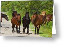 Wild Horses Of Corolla Greeting Card