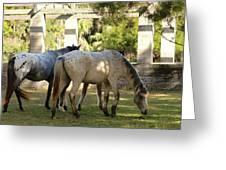 Wild Horses Of Cumberland Greeting Card