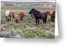 Wild Horses Of White Mountain Greeting Card