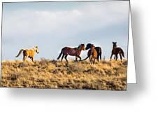 Wild Horses On The Bisti Greeting Card