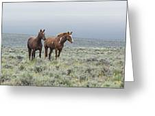 Wild Horses - Steens 1 Rw Greeting Card