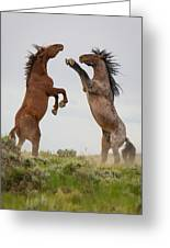 Wild Horse Challenge Greeting Card
