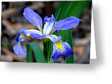 Wild Iris 3 Greeting Card