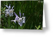Wild Iris 4 Greeting Card