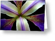 Wild Iris Macro On Black Greeting Card