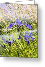 Wild Irises Greeting Card