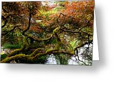 Wild Japanese Maple Greeting Card