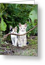 Wild Kats Greeting Card