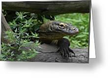 Wild Komodo Dragon Creeping Through Fallen Trees Greeting Card