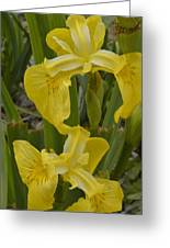 Wild Lilly Greeting Card