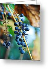 Wild Michigan Grapes Greeting Card