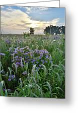 Wild Mints And Foxtail Grasses At Glacial Park Greeting Card