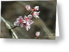 Wild Mountain Blossoms Greeting Card