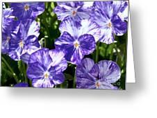 Wild Mountain Flowers Greeting Card