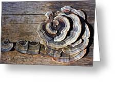 Wild Mushroom Greeting Card