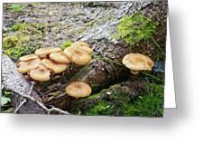 Wild Mushrooms 2 Greeting Card