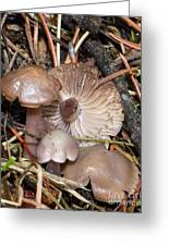 Wild Mushrooms Greeting Card