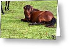 Wild Mustang At Rest Greeting Card