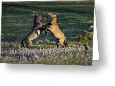 Wild Mustangs Playing 1 Greeting Card
