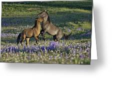 Wild Mustangs Playing 2 Greeting Card by Roger Snyder
