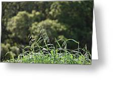 Wild Oats Greeting Card