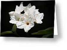 Wild Olive Tree Bloom Greeting Card