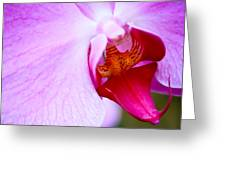 Wild Orchid 2 Greeting Card