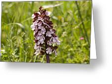 Wild Orchid In Meadow  Greeting Card
