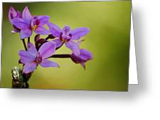 Wild Orchids 2 Greeting Card