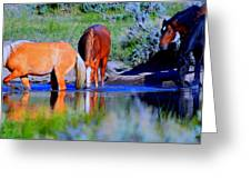 wild Palomino stallion of the Great Basin Country  Greeting Card