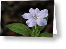 Wild Petunia Greeting Card