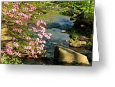 Wild Piedmont Azalea 4 Greeting Card