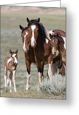Wild Pinto Family Greeting Card