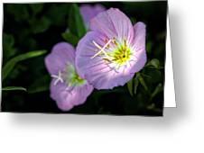 Wild Primrose Greeting Card