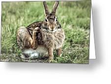 Wild Rabbit  Greeting Card