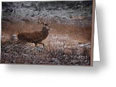 Wild Winter Stag Greeting Card