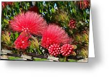 Wild, Red Fluffy Flowers  Greeting Card